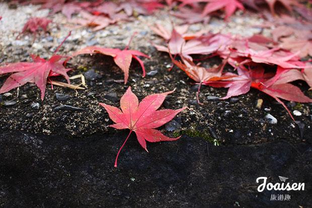 香嵐溪賞楓